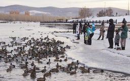 duckar floden fotografering för bildbyråer