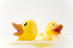 duckar gummi Arkivfoton