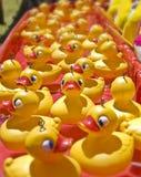 duckar rubber lott arkivbilder