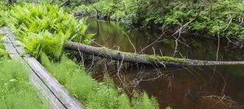Duckboard na konserwacja terenie Zdjęcie Stock