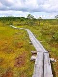 Duckboards στο εθνικό πάρκο Torronsuo, Φινλανδία στοκ εικόνες