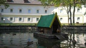 Ducken Sie das Haus, das auf den See im Park schwimmt stock footage