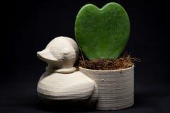 Ducken Sie Miniblumentopf mit der Herzblume, die dem Studio eingelassen wird Lizenzfreie Stockfotografie