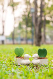 Ducken Sie Miniblumentopf mit Herzblume auf dem Garten Stockfotografie