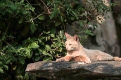 Duckende Katze Stockbild