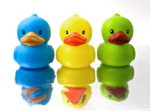 Duckey Stock Images