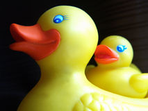 duckie橡胶 库存图片