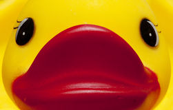 Duckie close-up Royalty Free Stock Photography