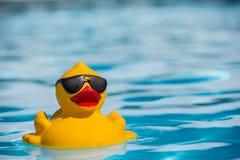 Duckie de borracha Foto de Stock