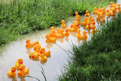 Duckie Race. Rubber ducks racing in a competition Royalty Free Stock Image