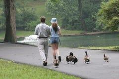 duckies落后 免版税库存照片