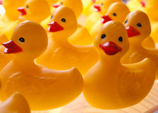 duckies λάστιχο Στοκ Φωτογραφίες