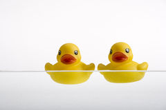 Duckies Stock Photography