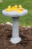 Duckies de borracha em um banho do pássaro Fotografia de Stock Royalty Free
