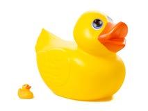 Duckies de borracha - grande contra pequeno Imagens de Stock