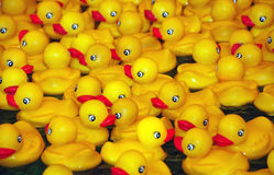 Duckies de goma amarillos Fotos de archivo libres de regalías
