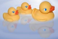 Duckies di galleggiamento Immagine Stock