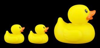 Duckies en caoutchouc Image stock