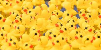 Duckies en caoutchouc Photos libres de droits