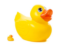 Duckies en caoutchouc - grand contre petit Images stock