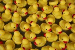 Duckies en caoutchouc jaunes Photos stock