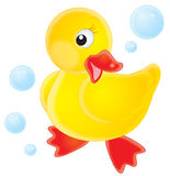 Duckling Royalty Free Stock Image