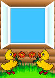 Duckling flowerses and open window Stock Photos