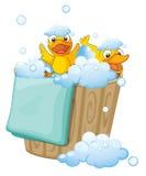 Duckling in a foam bucket Royalty Free Stock Photos