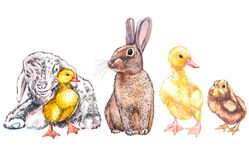 Duckling, goat, cute chick and rabbit watercolor illustration. Easter set. Hand painted card with traditional symbols