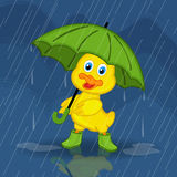 Duckling hiding from rain under umbrella Stock Image