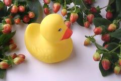 duckling inramnintt gummi Arkivfoto