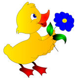 The Duckling keeps the flower Stock Image