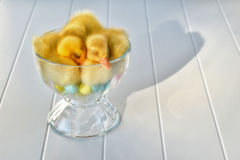 A Duckling Parfait Stock Photo