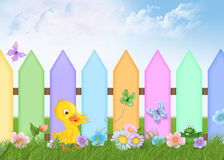 Duckling with picket fence Stock Photos