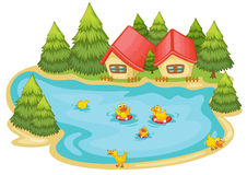 Duckling in a pond Royalty Free Stock Images