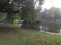 Duckling row Stock Photo
