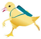 Duckling running to the shool Stock Image