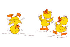 Duckling's dance. A illustration of duckling a having fun and dancing Stock Photo