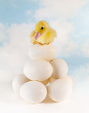 Duckling on stacked eggs Royalty Free Stock Photography