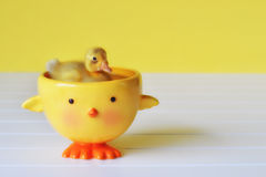 Duckling Swimming in a Duck Bowl Stock Photography