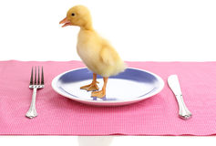 Duckling and table setting. Over the white Stock Photo