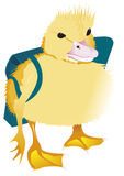 Duckling on the way of school. A young duck walk on the first day of the school Royalty Free Stock Photography