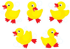 Ducklings Royalty Free Stock Photos