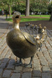 Ducklings, Boston Massachusetts Royalty Free Stock Image