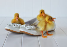 Ducklings and Easter Shoes Royalty Free Stock Photo