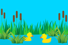 Ducklings in lake. Royalty Free Stock Image