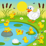 Ducklings with mother duck playing in lake Stock Photography