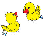 Ducklings (vector clip-art) Royalty Free Stock Images