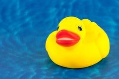 ducklingtoy Royaltyfria Foton