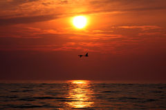 ducks восход солнца Стоковые Фото